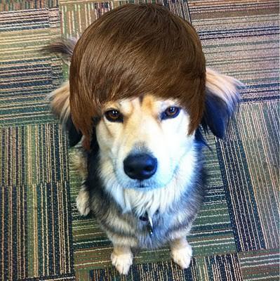 OMG: a Bieberhound!