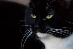 20110226-DSC00047-1 (Manx John) Tags: cat feline catnipaddicts