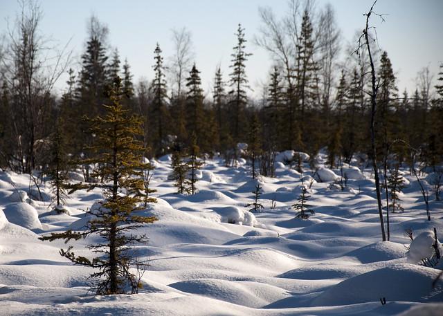 Trees free of snow