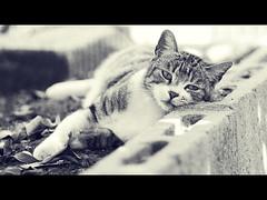 it's one of those sad days (wikiwai) Tags: its cat one nikon sad days d200 those