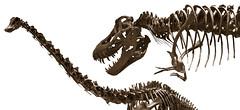 2007_smithsonian131-8 (rynoceras) Tags: skeleton smithsonian dinosaur naturalhistory paleontology prehistoric trex fossils tyrannosaurusrex
