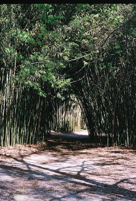 into the bamboo grove
