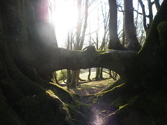 Tree Bridge (the woodland pixie) Tags: trees lewesdon