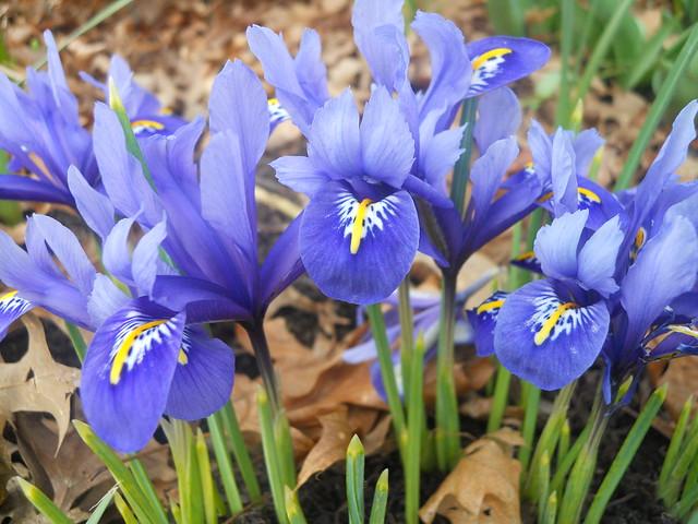 spring2011 009