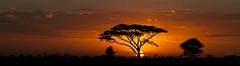 Sunset (Chalto!) Tags: africa kenya 15challengeswinner tree sunset dusk sun sky letterbox panorama acacia