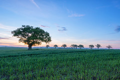 Awaken II (jactoll) Tags: morning trees light field rural sunrise landscape dawn nikon worcestershire nikkor predawn d610 stockgreen 1635mmf4 jactoll nikonfxshowcase