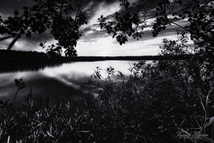 Sunset without colors (Usstan) Tags: autumn d750 nikon lens sigma reflection reflections lake outdoor silhoutte evening water enebakk norway 1224mm locations sun sunset clouds sky norge serene akershus blackandwhite ytreenebakk bw seasons landscape calm no