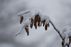 ckuchem-8078 (christine_kuchem) Tags: asthaufen baumstamm eis forst frost haufen holz staatsforst stmme tiere unterschlupf wald wasser wildnis winter winterschlaf winterwald gefroren gewsser kalt naturnah reif schnee wild ste
