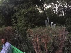 The Horrors of Solitude (Mayank Austen Soofi) Tags: delhi walla lodhi garden loneliness park bench the horrors solitude