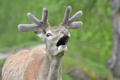 DSC_3888 (d90-fan) Tags: rauris raurisertal natur alpen salzburgerland sterreich nationalpark npht hohe tauern wandern krumltal seidlwinkeltal