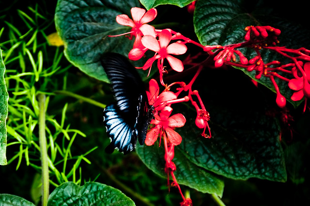 Butterfly exhibit 161