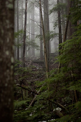 Deep Woods (project-b) Tags: trees mountain green bike fog forest mt low trail seymour atmospheric visibility