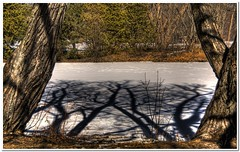 Pond Shadows (DecentXposure) Tags: trees winter snow ontario canada frozen spring pond nikon raw shadows framed cropped hdr saultstemarie d300 nosky TGAM:photodesk=shadow