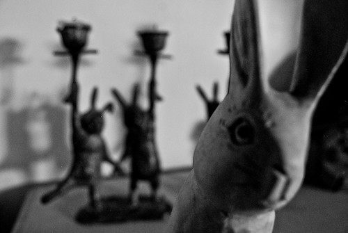 wide angle rabbits