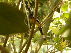 P1160590 (babsybou) Tags: travel india birds silent watching kerala du valley yatra sud inde attapadi birdswatching babsybou malleeshwaramjunglelodge pettickal