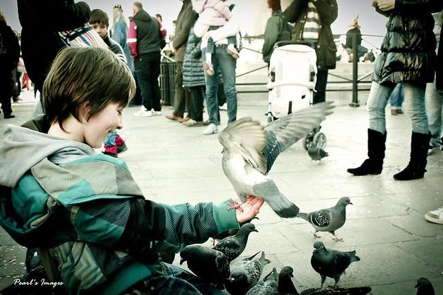 鴿子少年 Dove Boy