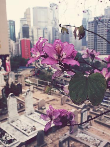 Blossom in Muslim cemetery
