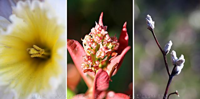 triptych florals