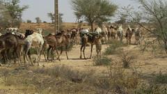 West Africa-2498