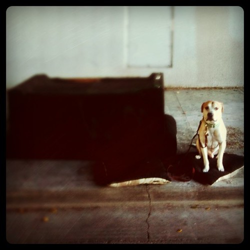 Week 13/52 Sofafree, Doggy Seating