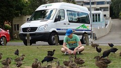 Pūkeko And Ducks