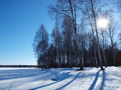 Morning Birches (Axiraa - back soon) Tags: winter snow tree nature landscape lago see scenery meer europe estonia baltic birch lumi puu baum 4winter baltics estland talv jrv viro estonie maastik valge   saadjrv tartumaa o vanagram