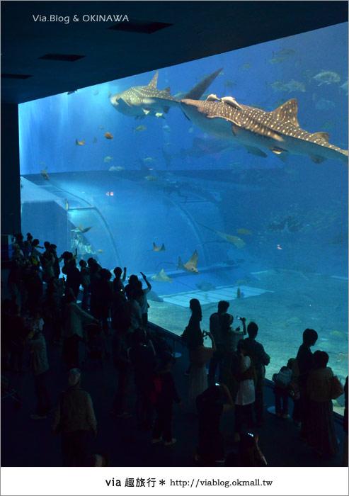 【沖繩景點】美麗海水族館~帶你欣賞美麗又浪漫的海底世界!20