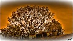 A secret no more LOL!! (**Hazel**) Tags: tree markfield photoscape oloneo