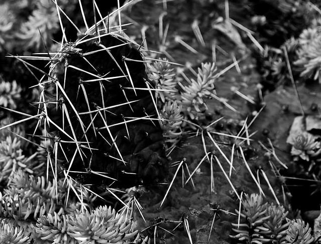 creative nature photography cactus