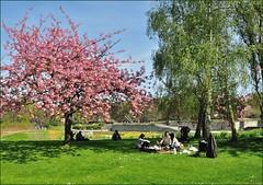 Paris : Le djeuner sur l'herbe (Pantchoa) Tags: paris parcfloral boisdevincennes jardin botanique printemps spring nikonpassion piquenique pinic merienda boisdevincenne nikkorafsdx18105mmf3556gedvr pantchoa ledjeunersurlherbe franoisdenodrest