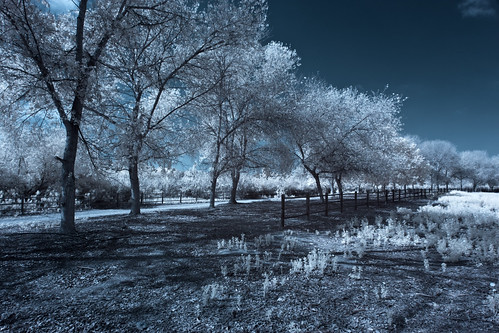 Sweetwater County Park (Infrared)
