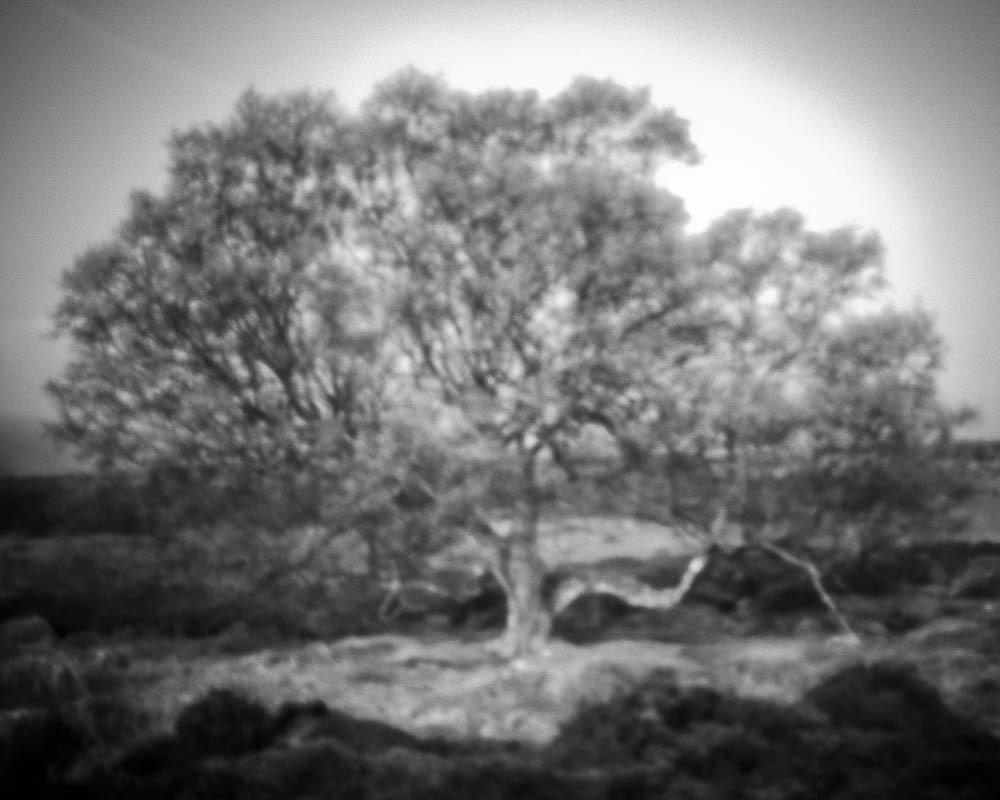 Tree on Lawrence Field