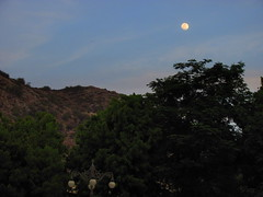 The Twilight Moon (Rahul Chhiber) Tags: blue trees sky moon mountains evening streetlights scenic hills backdrop ornate canonpowershot samode lamplights