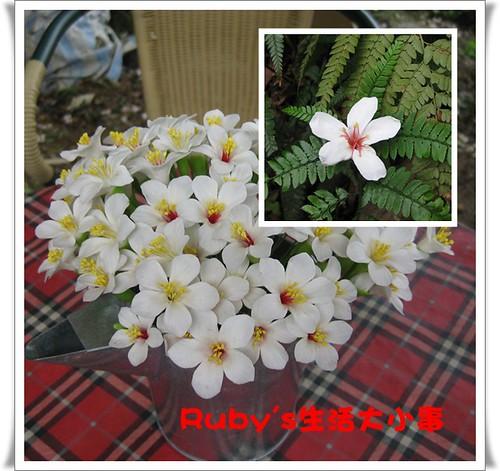 2010年油桐花 (8)