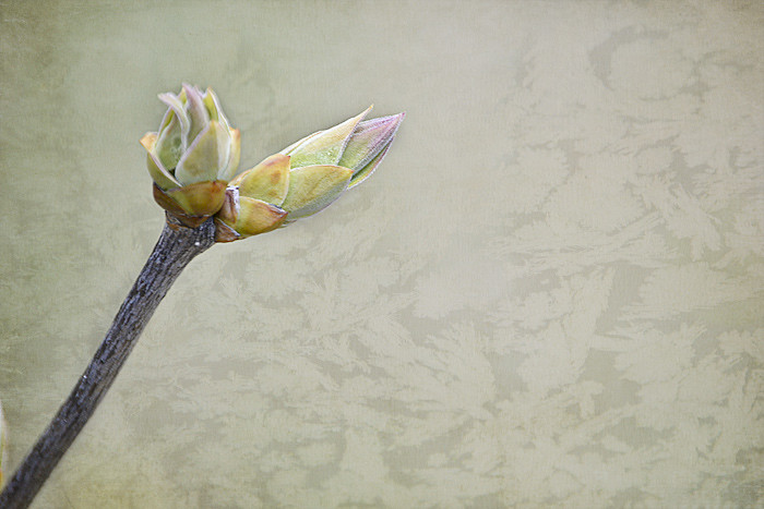 Spring bud textured