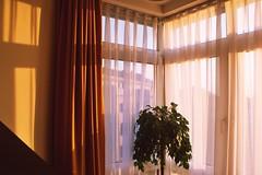 Good morning, sunshine! (ms holmes) Tags: lighting morning windows sunshine sunrise hotel licht early mood shadows fenster room atmosphere curtains sonnenaufgang schatten morgens sonnenschein frh hotelzimmer gardinen artificialtree canoneos1000d knstlichesbumchen