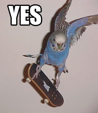 radical_bird