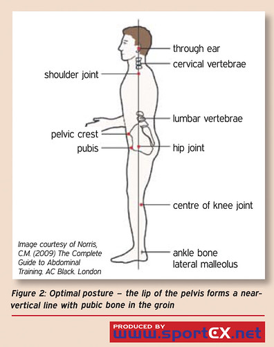 Optimal posture – the lip of the pelvis forms a near-vertical line ...