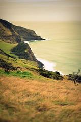 Raglan Coastline (Stacey Price (Roxy_77)) Tags: ocean sea newzealand overcast windswept coastline raglan tetotogorge roxy77