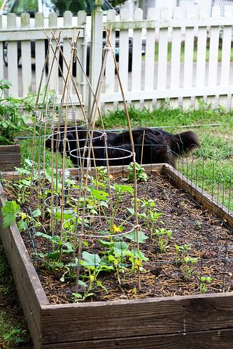 gardengrows3