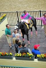 "2010-05-13 (83) J. D. Acosta on #4 Yankee Sweetheart for the win (JLeeFleenor) Tags: horseracing thoroughbredracing photo photography photos jockey جُوكِي ""赛马骑师"" jinete ""競馬騎手"" dżokej jocheu คนขี่ม้าแข่ง jóquei žokej kilparatsastaja rennreiter fantino ""경마 기수"" жокей jokey người winner horses thoroughbreds equine equestrian cheval cavalo cavallo cavall caballo pferd paard perd hevonen hast hest hestur cal kon konj kin beygir capall ceffyl cuddy yarraman faras alogo soos kuda uma pfeerd koin حصان кон 马 häst άλογο סוס घोड़ा 馬 koń лошадь pimlico marylandracing maryland"