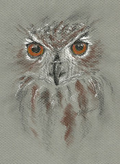 20110428_owl_eyes (Weekly Sketcher) Tags: owl owldrawing