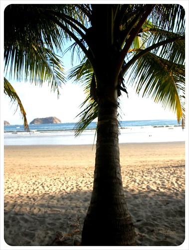 Palm tree at Samara Beach Costa Rica