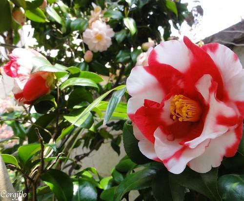 BLOG-110501-jardin-04