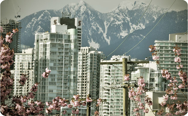 city-flowers-mountains