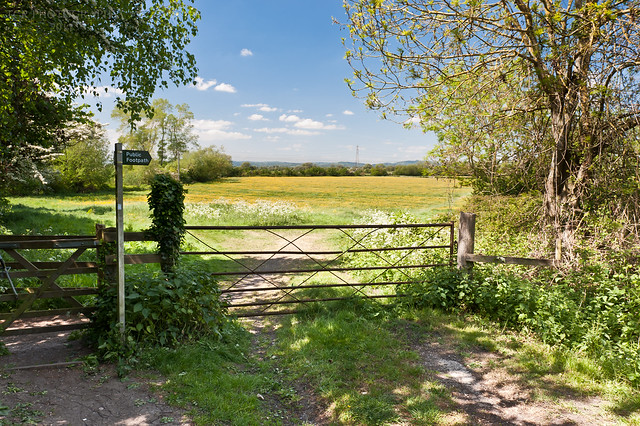 Puplic Footpath sign and gate leading into a buttercup meadow.