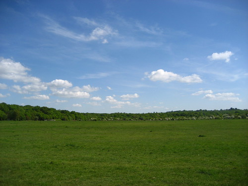 Epping Forest - across Chingford Plain