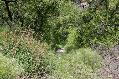 Montezuma Well trail