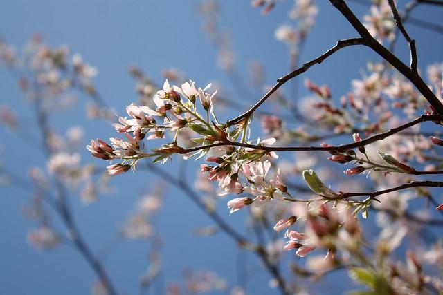 Day 250 - Blossom