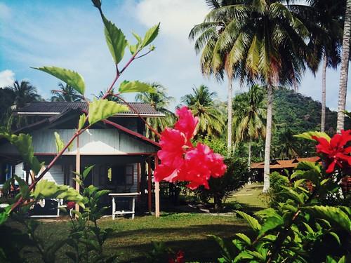 Hibiscus, D'Coconut Island Resort, Pulau Besar